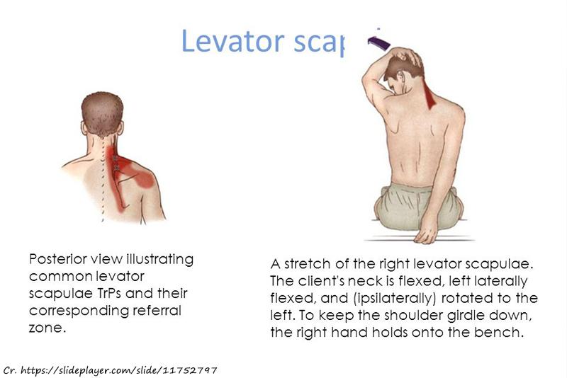 Levator Scap Stretch